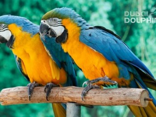 Creek Park Exotic Bird Show - Dubai Dolphinarium