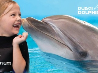 Swimming interaction in dolphin planet- Dubai dolphinarium