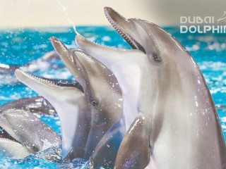 Get up close and personal with dolphins(Family tickets) at Dubai Dolphinarium