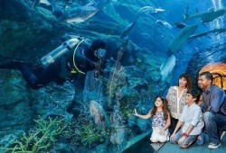 Dolphin Show + Underwater Zoo + Dubai Aquarium by Royal Smart Tourism for AED 199