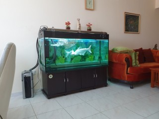 Fish Tank with the  fishes