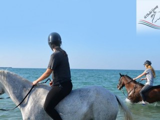 2 hrs Horse Riding on the Beach at AED 500