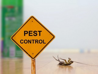 Pests Control | Call Now @ 971 4 2223929